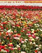 Tierra de flores