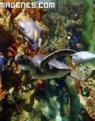 Colorido acuario