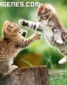 Ataque felino