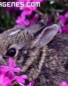Imagen de un conejo