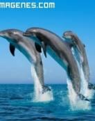 Imagen de delfines al atardecer