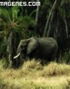 Imagen de elefante en la selva