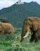 Imagen de elefantes en la sabana