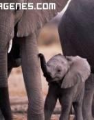 Imagen de una familia elefantes
