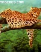 Imagen de guepardo en su rama