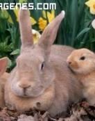 Imagen de una famila conejo