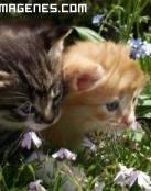 Gatitos en el prado