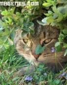 El gato y la flor amarilla
