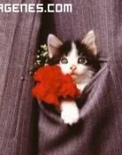 Imagen de gatito en chaqueta