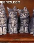 Imagen de una familia gatitos