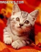 imagen de un dulce gatito