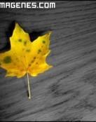 Hoja de otoño