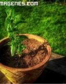 Planta en maceta en 3D