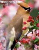 Pájaro entre florecillas