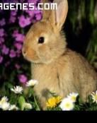 Imagen de pequeño conejo