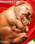Imagen de un perrito con su osito