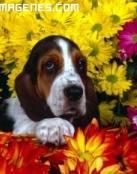 Perro entre flores
