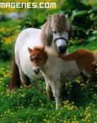 Imagen de familia de ponis