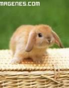 Imagen de un conejito solitario