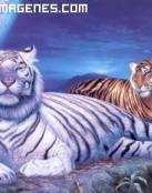 Tigres en 2 D