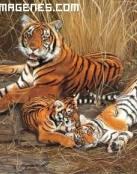 Imagen de tigres en familia