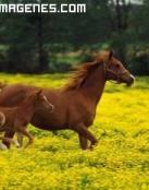 Imagen de una yegua con su potro